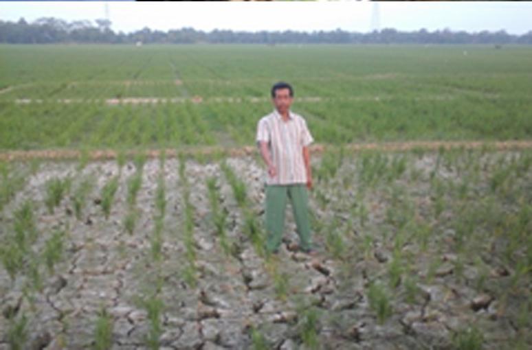 Ratusan Hektar Sawah Kekeringan, Kades Rancajaya Harapkan Perbaikan Sekunder